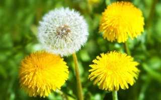 Травы для похудения: правила использования