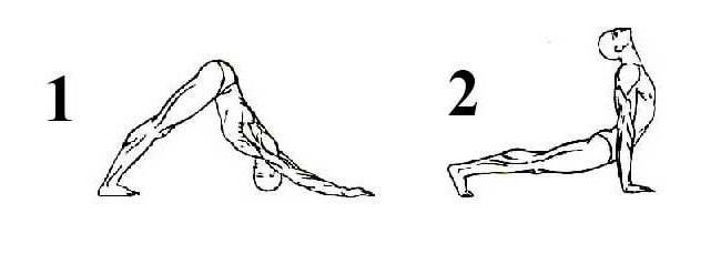 5 упражнение Тибетской гимнастики